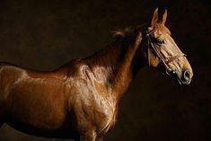 photographie d'un cheval