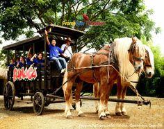 Paseo en carroza, para el disfrute de todos los niños visitantes al parque.