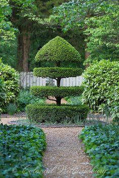 Topiary Campbell's Tavern Garden between the tavern and Isham Goddin Shop. Garden Art, Topiary Garden, Landscape Design, Gorgeous Gardens, Urban Garden, Outdoor Gardens, Topiary, Dream Garden, Beautiful Gardens