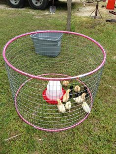 hula hoop chicken tractor is probably about the size I'd need. #ChickenCoop #DIYchickencoopplans