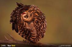 Amusing owl...
