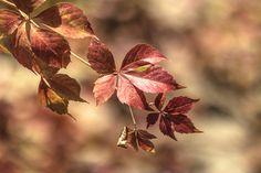 Диагональ осени... diagonal autumn - null