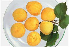 Alte Ananas Marille, © Arche Noah