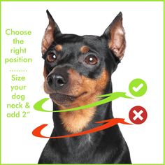 Dog Training Tools, Training Your Dog, Dog Control, Tie Out, Collars, How To Apply, Stainless Steel, Teaching