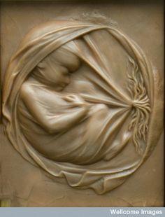 Foetus in placenta in utero.