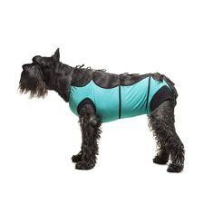 E-Collar Alternative for Cats and Dogs Designed to Protect Abdominal Wounds and Skin Disease. Award Winning and Patented Design Recommended by Veterinarians Worldwide. (X-Large, Teal Green) Cat Health, Cat Collars, Teal Green, Dog Design, Shih Tzu, Cool Cats, Pet Supplies, Cat Lovers, Dog Cat