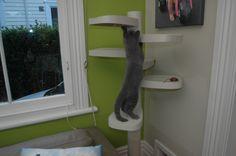 Monkee Tree Cat Climbing Gym.