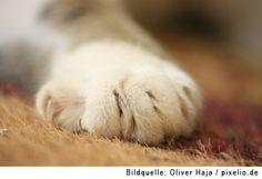 Tierfotograf Oliver Haja erzählt im Interview auf www.cotier.de wie man bessere Katzenbilder macht