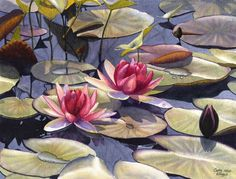 Water Lily Art Watercolor Print of Original Painting by Cathy Hillegas, red, pink, green, yellow, blue, purple