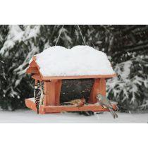 "Songbird Essentials 14"" Wild Bird Feeder with Suet Cage - JacobsOutdoor"