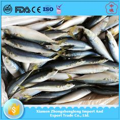 200-300g Frozen bqf Pacific Mackerel Seafood Fish.