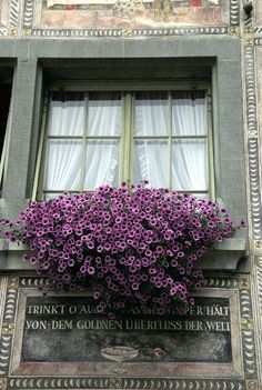 I'm thinking this could be the place where Mr. Grey lives or at least one of his cottages!  Purple and grey.  Very nice look for a window flower box arrangement to accompany this home!
