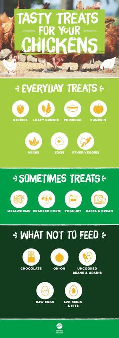 Treat your flock to occasional treats every now and then to add variety to their diet. Keep your chooks satisfied with some of these great treat options. Find out more here, https://www.backyardchickencoops.com.au/what-do-chickens-eat-a-chicken-treat-chart #loveyourchickens #chickenfeed #infographic