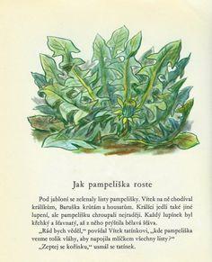 Povídka: Jak pampeliška roste