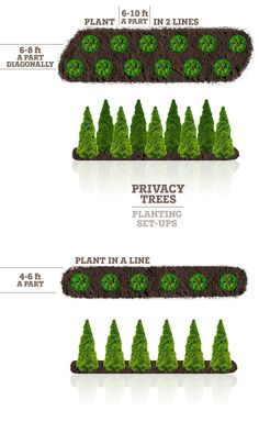 Need privacy trees to help block out your neighbor? Our privacy trees are the perfect solution! Pick and order your fresh privacy trees online today for FAST delivery! Privacy Plants, Privacy Landscaping, Home Landscaping, Front Yard Landscaping, Arborvitae Landscaping, Landscaping With Trees, Privacy Fences, Farmhouse Landscaping, Landscaping Design