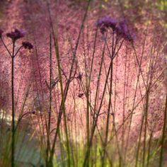 grasses and perennials Saint Jean, Perennials, Grasses, Plants, Gardens, Garden Landscaping, Atelier, Lawn, Grass