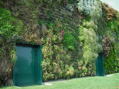 the world's biggest vertical garden, with 44,000 plants on 13,600 square feet of wall is at a shopping mall near Milan