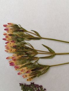 Dried flowers from Northumberland