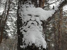 Winter. Snowy face like an old man in the woods