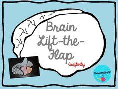 Brain Lift the Flap Craftivity {Free}