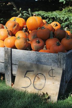 WooHoo...love to find pumpkin bargains like this (or cheaper sometimes at flea markets...)