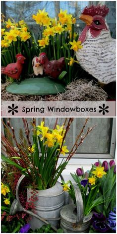 Spring Windowboxes