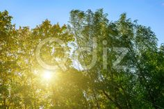 Qdiz Stock Photos | Sunlight in Branches of Colorful Trees,  #autumn #background #beautiful #beauty #blue #branch #colorful #day #environment #foliage #golden #grass #green #idyllic #leaf #leaves #multicolored #nature #nobody #outdoors #park #plant #scenery #scenic #season #sky #Sun #sunlight #sunny #tree #view #weather #wood #yellow