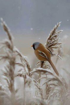 Pretty little finch