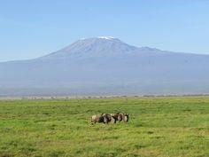 Parc national d'Amboseli, Kenya#Au pied du Kilimandjaro, le parc national d'Amboseli est l'un des plus vieux et le deuxième parc le plus visité du Kenya. Hemingway fut fasciné par le coin et s'en inspira pour écrire Les Neiges du Kilimandjaro. Le parc national d'Amboseli compte pas moins de 1 000 éléphants, des buffles, gnous, gazelles, antilopes, hippopotames…#http://urlz.fr/3hoF#laritrip.wordpress.com