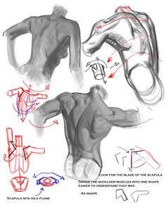 grey Folder of Drawing Tips and Tricks Human Anatomy Drawing, Human Body Anatomy, Anatomy Study, Gesture Drawing, Male Figure Drawing, Figure Sketching, Figure Drawing Reference, Anatomy Reference, Back Drawing