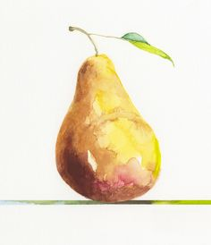 Jake Marshall watercolor. A pear from a series of pears resting on colored lines.