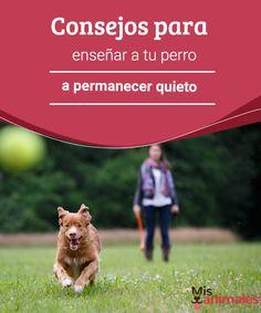 Consejos para enseñar a tu perro a permanecer quieto  En esta guía aprenderás todos los los beneficios y trucos que necesitarás para lograr enseñar a tu perro a permanecer quieto.