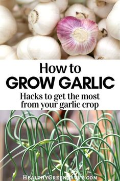Home-grown garlic is an easy and economical crop more gardeners should try. Here's all you need to know to harvest garlic bulbs, shoots, and scapes for delicious meals and better health. #growgarlic #garden #growyourown #gardeningtips #vegetablegarden Delicious Fruit, Delicious Meals, Gardening For Beginners, Gardening Tips, Garlic Bulb, Eating Organic, Frugal Living Tips, Grow Your Own Food, Better Health