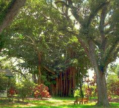 Cb smith park pembroke pines places in sofla - Flamingo gardens fort lauderdale ...