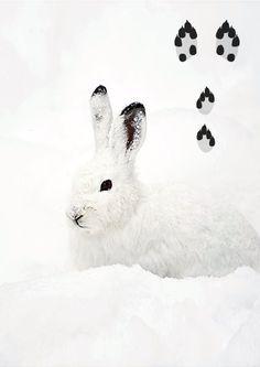 kuva Biology For Kids, Nature Crafts, Finland, Rabbit, Animals, Project Ideas, Science, Dwarf Rabbit, Bunny