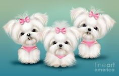 Snowflakes Maltese illustration of 3 happy girls. Very girly whimsical happy art. Cute Baby Animals, Animals And Pets, Chien Yorkshire Terrier, Painting Snowflakes, Cute Puppies, Cute Dogs, Maltese Dogs, Baby Maltese, Happy Art