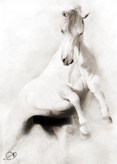 Arabian Horse by AL-Tubaiykh