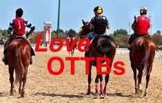 I Love Off-the-Track Thoroughbreds- OTTBs