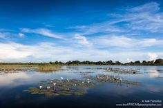 The Okavango delta is home to permanent and seasonal wildlife. Okavango Delta, Wildlife Photography, River, Seasons, Mountains, Nature, Outdoor, Outdoors, Naturaleza