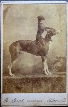 (via Don the Greyhound and His Terrier - Project B - Limited Edition Prints, Vintage Photographs, Shop Collections)