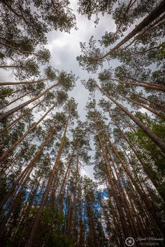 Trees to the sky. Poland, National Parks, Scenery, Trees, Clouds, Sky, Facebook, Nature, Pictures