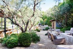 Drought-friendly landscape in backyard