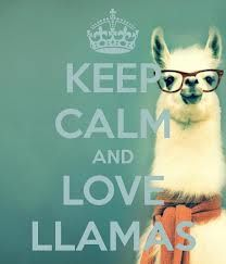 KEEP CALM AND LOVE LLAMAS. Another original poster design created with the Keep Calm-o-matic. Buy this design or create your own original Keep Calm design now. Alpacas, Animals And Pets, Baby Animals, Funny Animals, Cute Animals, Baby Llama, Cute Llama, Llama Face, Keep Calm And Love