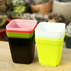 Gardening Mini Plastic Pots Vase With Tray Square Flower Bonsai Planter Nursery Pots Colorful Square Pots Planting Tools, Planting Seeds, Gardening Tools, Plastic Flower Pots, Most Beautiful Gardens, Rare Flowers, Vase, Flower Seeds, Garden Supplies