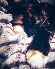 Lollipop #cat #chat #sieste #cool #happycatday #sweet #doux #goodmoment #lovecats #iphone6s #instagood #akapicturesart