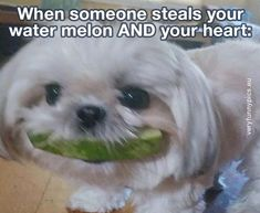 Get your laugh on to these 23 Super Funny Pictures! Funny Animal Memes, Dog Memes, Funny Animals, Funny Memes, Hilarious, Jokes, Pug Accessories, Funny Parenting Memes, Super Funny Pictures