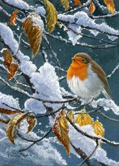 All images are the original artwork of nature artist and wildlife artist Dr. Jeremy Paul and are protected by international copyright laws. Aix Galericulata, Robin Pictures, Nature Artists, Robin Bird, Christmas Bird, Winter Art, Christmas Illustration, Wildlife Art, Bird Art