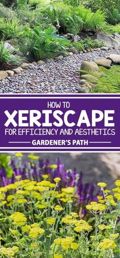Have you heard of xeriscaping? Often associated with desert climates, it�s much more than succulents and cacti. This sensible landscape style conserves water, reduces garden maintenance, and provides habitat for endemic species. Learn all about its aesthe