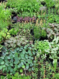 Tips and tricks for growing herbs from seed, from Juliet at Blog Castanea.