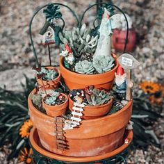Natalie Linda (@itsnatalielinda) • Instagram photos and videos Succulent Gardening, Succulent Care, Planting Succulents, Container Gardening, Gardening Tips, Linda Plant, Cactus House Plants, How To Water Succulents, Mini Fairy Garden